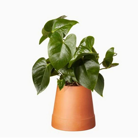 "Bloempot Terracotta ""Flipped""  FLP-TC-08-01"