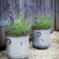 Zinken Plantenbakken Voor Buiten Malmesbury Set 3 Stuks PLGA02
