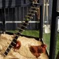 Zeshoekig Kippenhok Zwart Voor 7 Kippen 1501-1