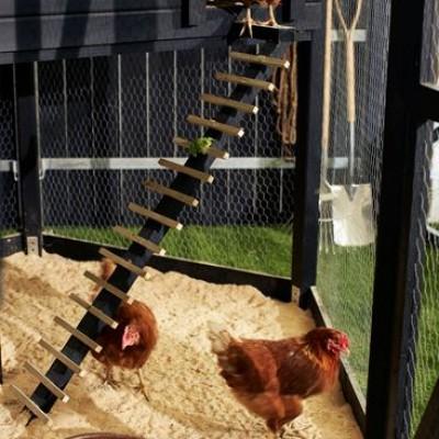 Kippenhokken