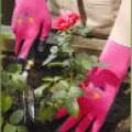 With Garden Flora tuinhandschoen roze Flora roze 315