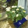 With Garden Landscape tuinhandschoen donkerblauw donkerblauw 596